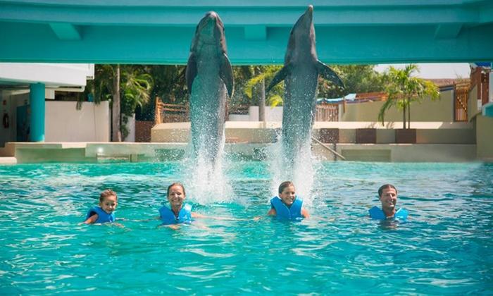Delphinus Nado con Delfines: Cancún: desde $609 por nado con delfines en Delphinus + transporte + entrada al Acuario Interactivo de Cancún + presentación marina