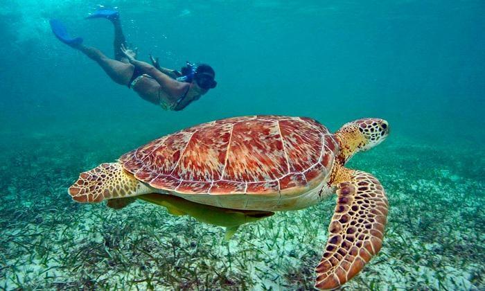 Viajes LM - Viajes LM: S/.59 en vez de S/.70 por tour tortugas marinas + snorkeling desde Máncora con Viajes LM