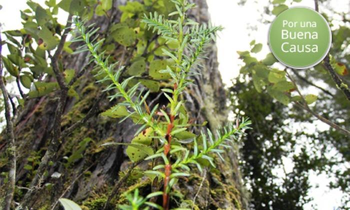 WWF: Dona $2.000 para ayudar a preservar un alerce en un bosque milenario de la red de parques indígenas de Mapu Lahual en el sur de Chile con WWF