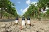 Grande tour del vino con degustazione di vini a San Gimignano nella...