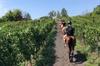 Esperienza a cavallo al Vesuvio con degustazione di vini
