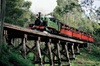 From Melbourne : Puffing Billy with Australian Wildlife Tour and Lu...