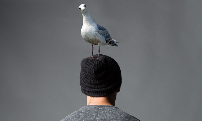 Allen Theatre at ACT - Downtown Seattle: Stupid F#@*ing Bird at Allen Theatre at ACT