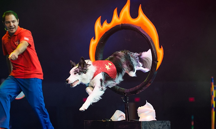 Santa Clarita Performing Arts Center - Santa Clarita: Stunt Dog Experience at Santa Clarita Performing Arts Center