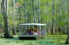 New Orleans Swamp and Bayou Boat Tour (With Transportation)
