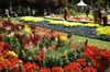 Carnival Of Flowers Toowoomba