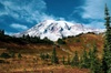 Mount Rainier National Park Day Trip and Private Tour
