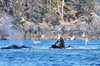Whale Watching and Marine Wildlife Tour