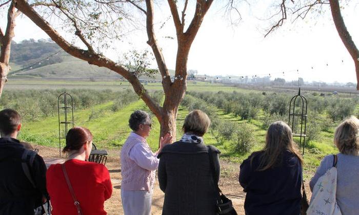 IL Fiorello Olive Oil Company - IL Fiorello Olive Oil Company | Groupon