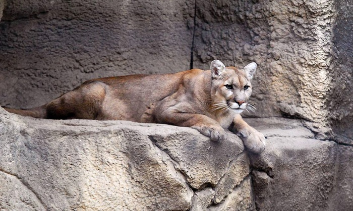 Lincoln Park Zoo - Lincoln Park: Discounted Zoo Parking at Lincoln Park Zoo