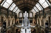 Natural History Museum of London Guided Tour - Semi-Private 8ppl Max