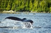 Saltwater Expedition Sightseeing & Wildlife by Private Boat