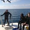 Dive Charter: Inshore Wreck and Bridge Span