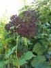 Edible Wild Plants Certificate Course
