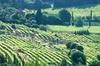 Excursion d'une journée complète de dégustation de vins autour de B...