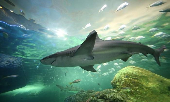 More About Ripley's Aquarium
