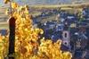 Excursion œnologique d'une demi-journée en Alsace au départ de Colmar