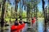 Manchac Swamp Mystic Wildlife Kayak Tour