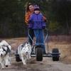 Dogsledding Adventure On Wheels