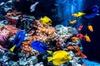 Berlin Combo: Madame Tussauds Berlin und AquaDom und SEA LIFE Eintr...