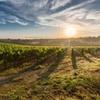 VIP Wine and Vineyard Tour