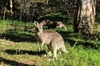 Australian Wildlife & Waterfalls Private Tour with 'Personalised Sy...