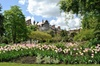 Visit Chelsea Physic Garden & 3 Hour Westminster Walking Tour