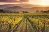 Tour nel Chianti con degustazione di vini al tramonto per piccoli g...