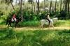 Excursión de paseo a caballo desde Sevilla