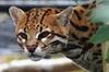 Skip the Line:Birmingham Wildlife Park Family Ticket-1 adult &3 kid...