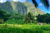 Personalized Private Tour of O'ahu