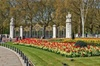 Visit Top London Sights! Local Guide