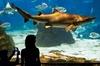 Entrada Evite las colas al acuario de Barcelona