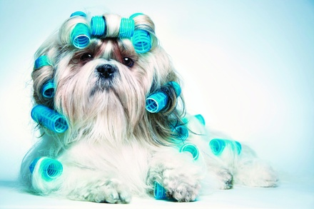 $27.50 For $55 Toward Grooming Services