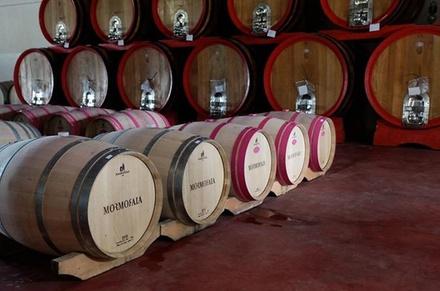 Tour per piccoli gruppi: tour enologico della Toscana a Siena e San...