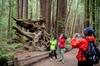 Sonoma Redwoods Hiking Tour