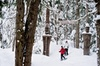Canadian Wilderness Adventures - Vancouver: Medicine Trail Snowshoe Tour