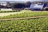 Private Hunter Valley Day Trip from Sydney Including Wine, Chocolat...