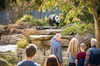 Adelaide Zoo Behind the Scenes Experience Ticket - Panda and Friend...
