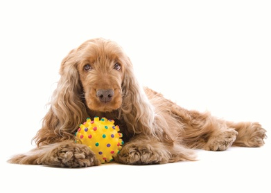$15 For 2 In-Store Do-It-Yourself Dog Washes (Reg. $30) 9b72f32e-6d05-4f2b-97cb-9f3780e6ce07