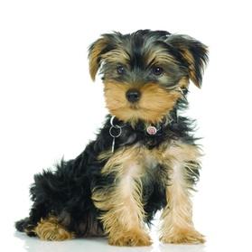 $15 For $30 Toward Your Choice Of Pet Supplies a3ed8d1d-b311-4795-951a-c5dbb6c879af