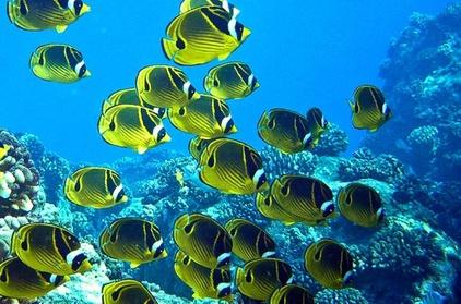 Blonde's Reef Express Snorkel Tour 81deb297-7994-4b76-bcd9-ff6476eccc39