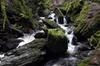 Magical, Enchanting Forest Walk, Loch Lomond & Dumbarton Castle Exp...