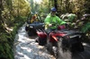 Quad Tour on the Enchanted Forest Track in Greymouth