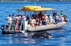 Whale Watch on Explorer Super Raft in Lahaina