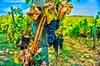 Gita di un giorno in Valpolicella da Venezia: Degustazione di vini ...