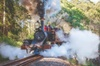 Puffing Billy Steam Train & Healesville Wildlife Sanctuary Tour Fro...