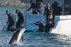 2 Day Kaikoura Whales and Dolphins Overnight Tour from Christchurch