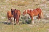 2-hour Outer Banks Wild Horse Tour by 4WD