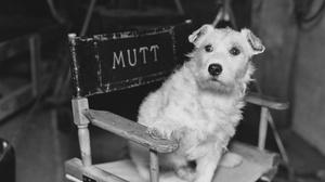 Reading Cinemas Grossmont : Dog Film Festival